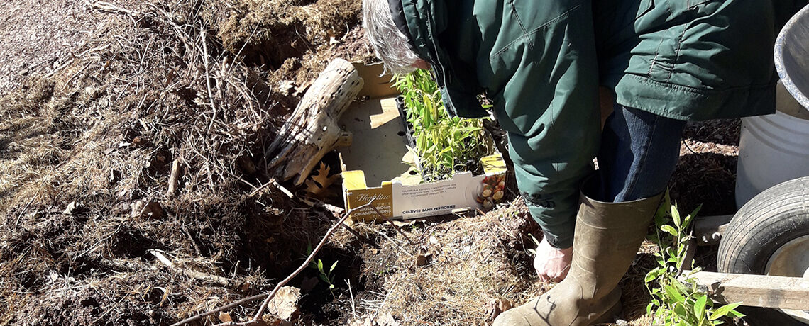 Planting Willows Slider Image